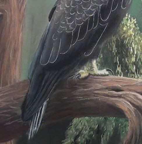 block in the eagle wing tips and tail feathers