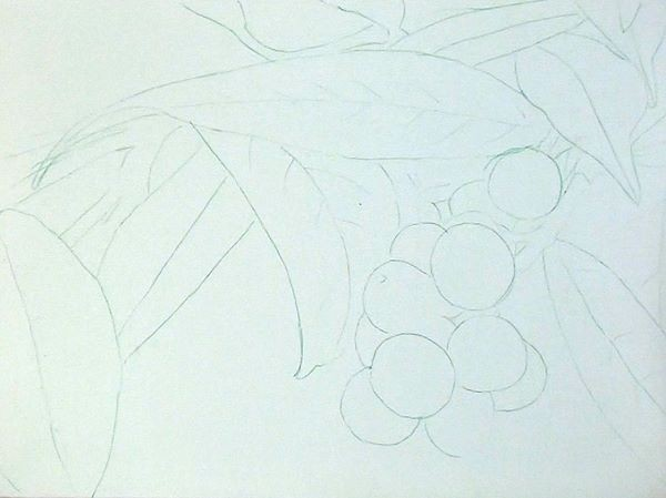 transferred drawing - how to paint berries in acrylic
