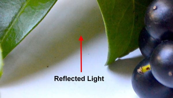 reflected light visible in shadows - how to paint berries in acrylic