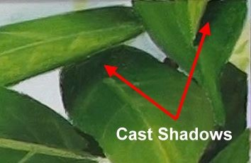 leaf cast shadows - how to paint berries in acrylic